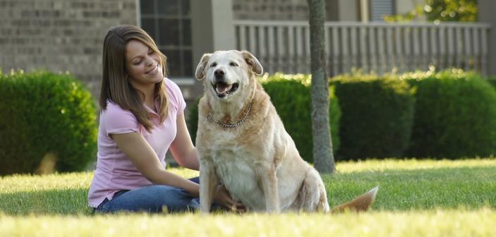 Undgå at få bøder på grund af din hund